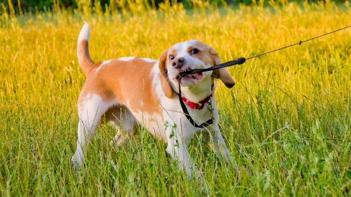 мерки возраста собак